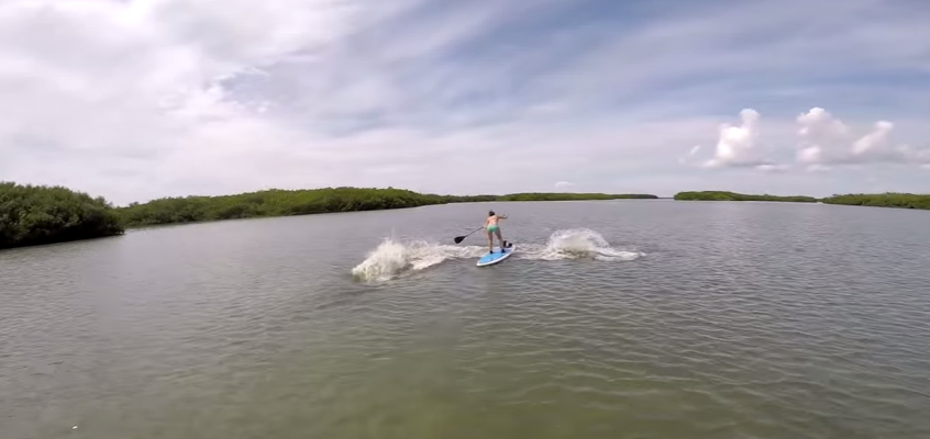 Manatees Almost Take Out Paddlers
